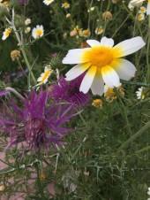 La Cala meadow4_220418