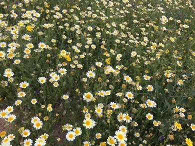 La Cala meadow9_220418